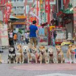 神戸南京町の中心
