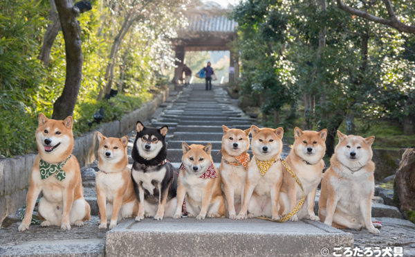 高台寺と柴犬