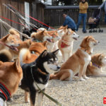 興福寺と柴犬