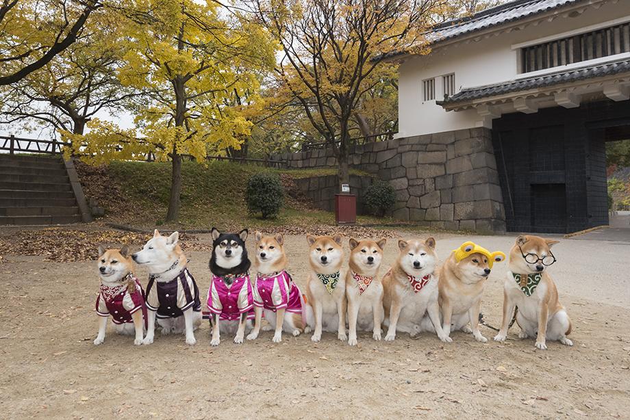 大阪城と柴犬