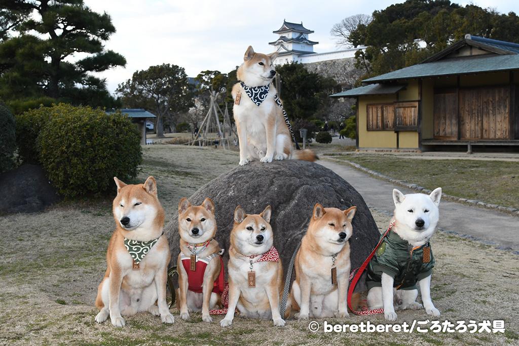柴犬集合ゲリラ小隊