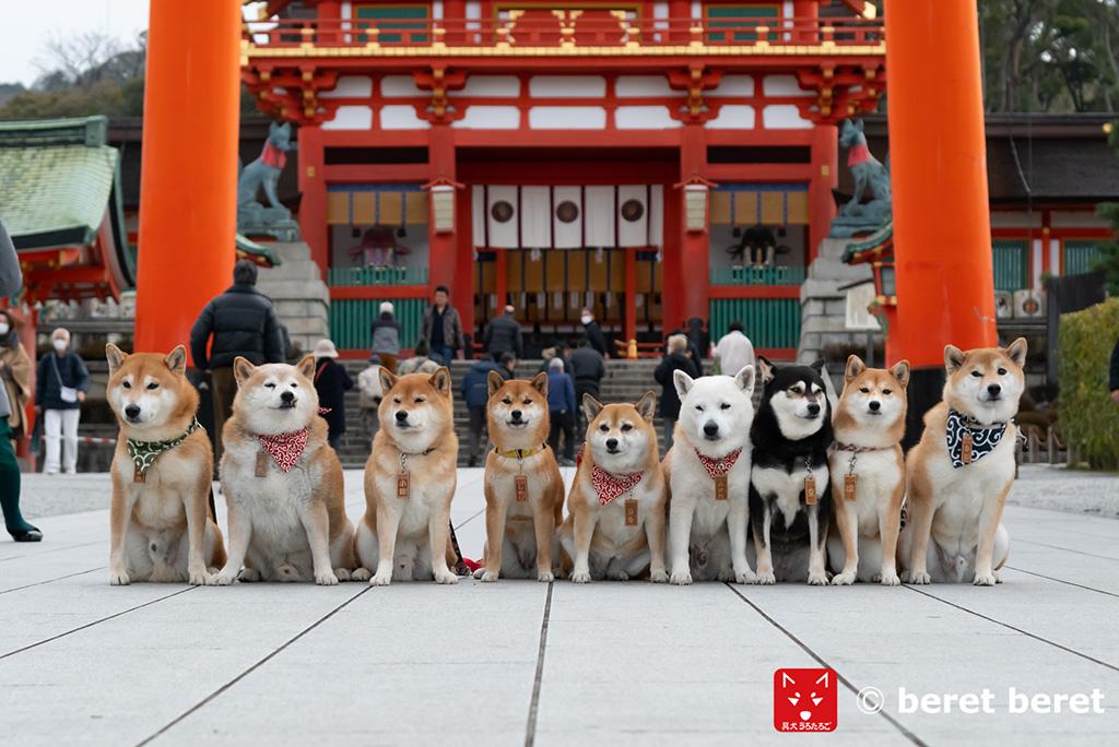 伏見稲荷大社の柴犬達
