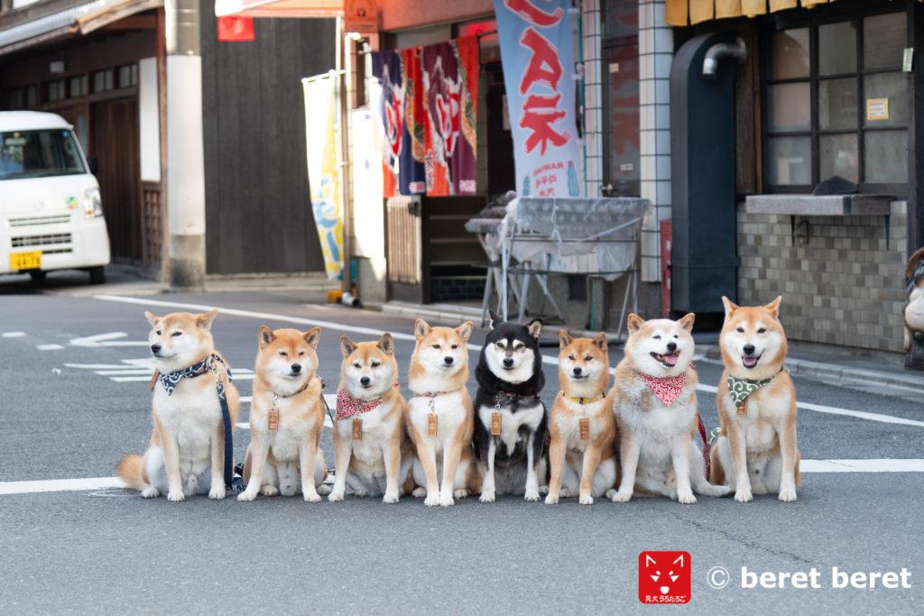 京都の路地で柴犬と