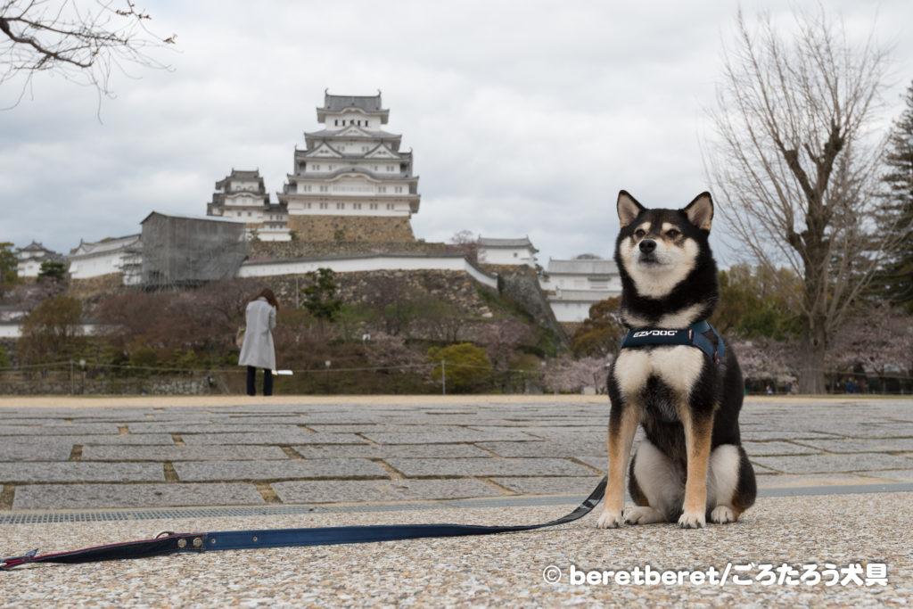 黒柴と姫路城