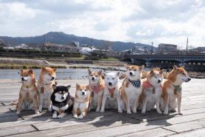 鴨川と柴犬