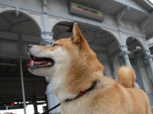 浜寺公園駅舎と柴犬ゴロ