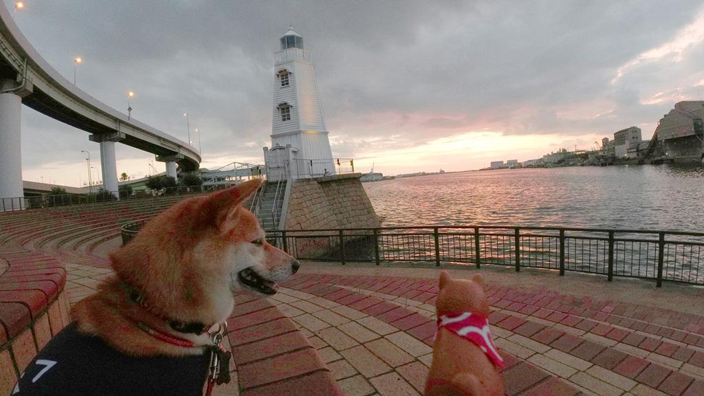 大浜灯台と柴犬